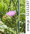 大きなアザミのようなアンテーチョークの花 32151287