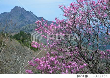 アケボノツツジ8(ヨコ)(愛媛県岩黒山 石鎚山背景) 32157476