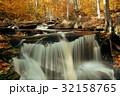秋 森林 林の写真 32158765
