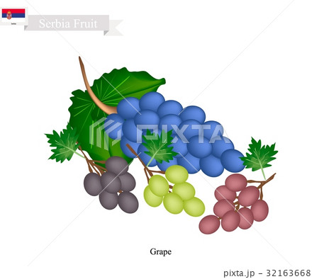 Ripe Grape, A Popular Fruit in Serbia 32163668