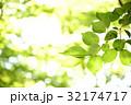 新緑 エコ 葉っぱの写真 32174717