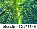 京都 嵐山 嵯峨野の写真 32175549