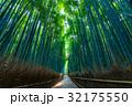 京都 嵐山 嵯峨野の写真 32175550