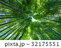 京都 嵐山 嵯峨野の写真 32175551