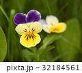 花 お花 フラワーの写真 32184561