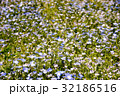 山中湖花の都公園 ネモフィラ 32186516
