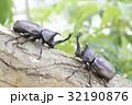 日本のカブトムシ 32190876