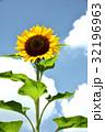 花 ヒマワリ 夏の写真 32196963