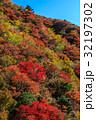 妙見岳 紅葉 雲仙の写真 32197302