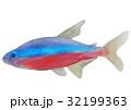 カージナルテトラ テトラ 熱帯魚のイラスト 32199363