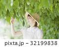 ゴーヤ農家 32199838