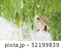 ゴーヤ農家 32199839