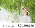 ゴーヤ農家 32199840