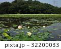 蓮 蓮池 花蓮の写真 32200033
