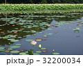 蓮 蓮池 花蓮の写真 32200034