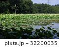 蓮 蓮池 花蓮の写真 32200035