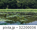 蓮 蓮池 花蓮の写真 32200036