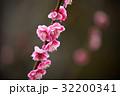 桃の花 32200341