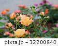 蕾 黄色 花の写真 32200840