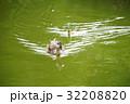 カルガモ 野鳥 水鳥の写真 32208820