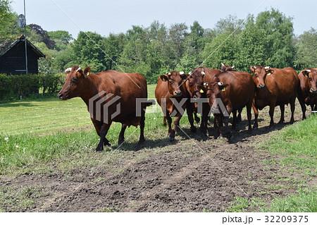 牛 オーガニックファーム 32209375