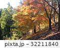 紅葉した木々 32211840