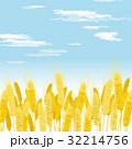 麦 麦畑 穂のイラスト 32214756