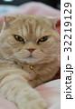 手を伸ばす猫 32219129