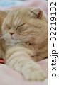 横を向いて寝る猫 32219132