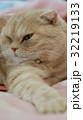 左を見る猫 32219133