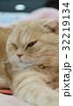 左方向を見る猫 32219134