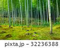 Bamboo forest of Arashiyama near Kyoto, Japan 32236388