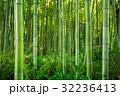 Bamboo forest of Arashiyama near Kyoto, Japan 32236413
