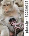 タイ タイ国 タイランドの写真 32239915