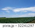 結球前のキャベツ畑 32241297