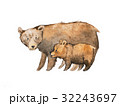 水彩画 褐色 くまのイラスト 32243697