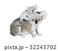 コアラ くま クマのイラスト 32243702