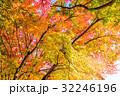 紅葉 秋 楓の写真 32246196