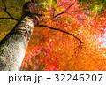 紅葉 秋 楓の写真 32246207