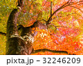 紅葉 秋 楓の写真 32246209