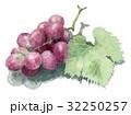 ぶどう 果物 フルーツのイラスト 32250257