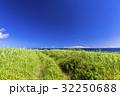 風景 サトウキビ田園 青空の写真 32250688