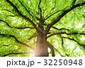 クスノキ 巨樹 大木の写真 32250948