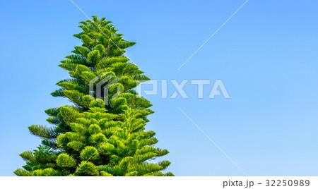 木と青空 32250989