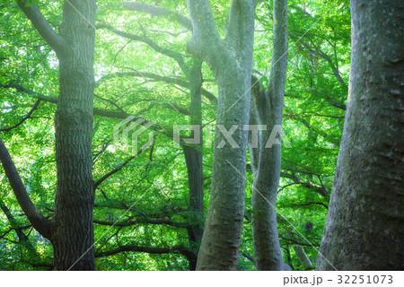深い森の中 32251073