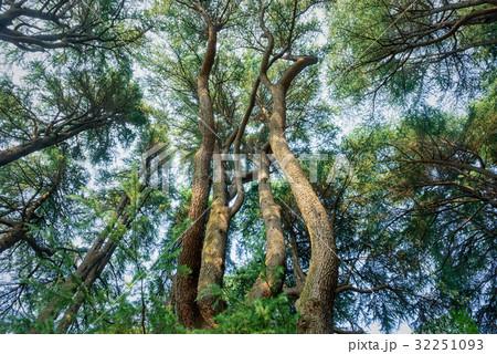 常緑樹, エコロジーイメージ 32251093