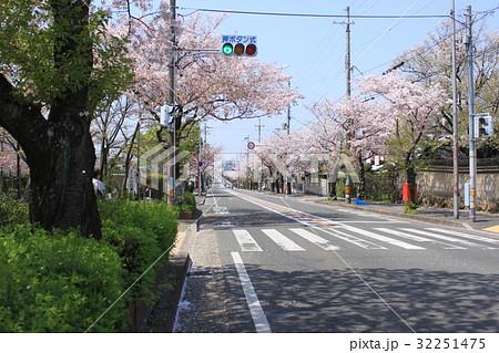 堺市堺区御陵通りの桜並木 32251475