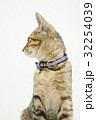 ペット 猫 横顔  32254039