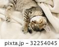 リラックスして寝る猫 32254045