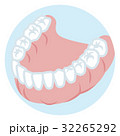 下顎の歯列 正常 32265292